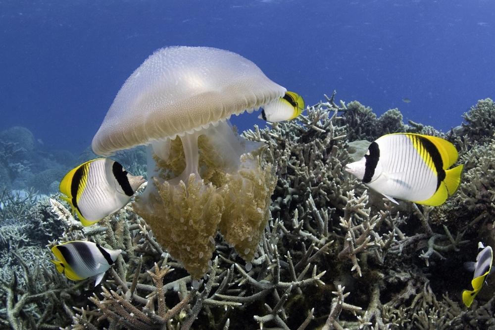 Dưới đáy đại dương chứa đựng vẻ đẹp khôn tả từ những rặng san hô hay các loài động thực vật biển phong phú, đủ màu sắc