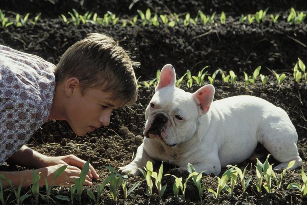 Sự xuất hiện của cậu bé Walter đã thay đổi cuộc sống điền viên dưỡng già của hai người đàn ông trong phim ''Secondhand Lions''