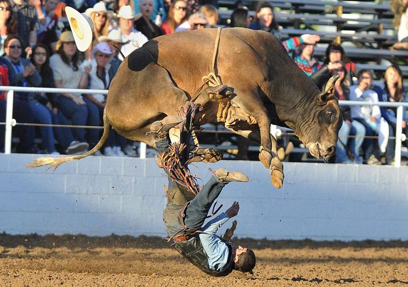 Môn thể thao nguy hiểm đấu bò tót.