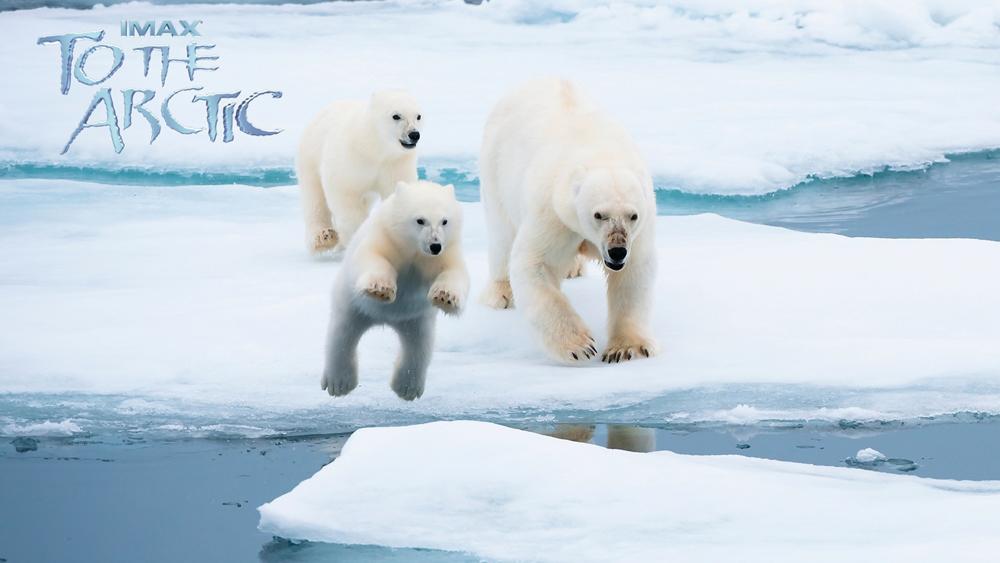 Ba mẹ con đang tìm đường trở về nhà ở vùng địa cực hoang dã.