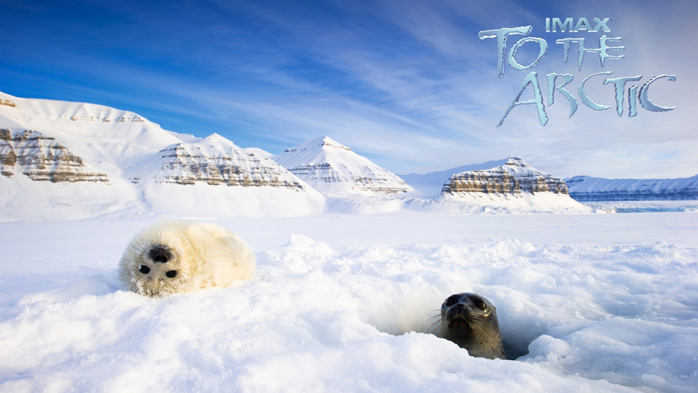 Một phân cảnh khác trong phim ''To The Arctic''
