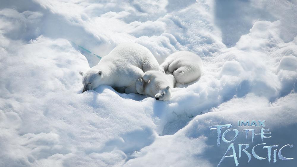 ''To The Arctic'' là bộ phim tài liệu, đưa khán giả đến với chuyến hành trình kỳ thú nhưng cũng lắm hiểm nguy của cô gấu Bắc Cực cùng hai chú gấu con sinh đôi mới bảy tháng tuổi.