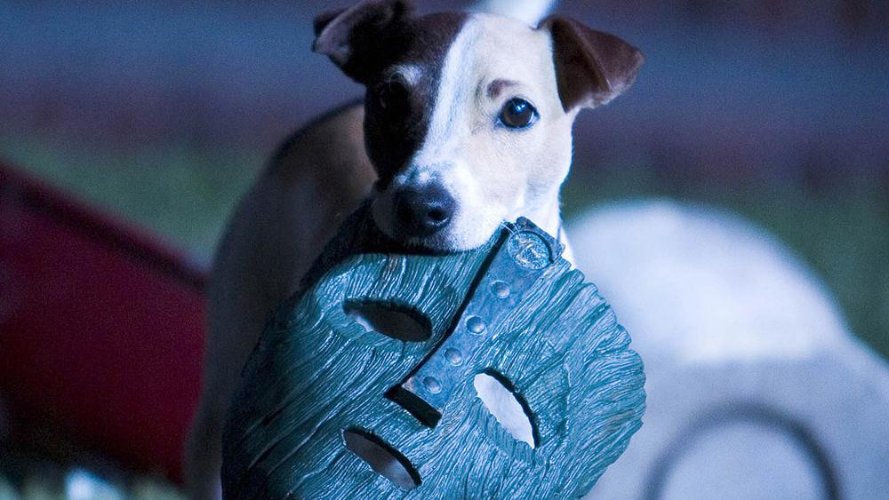 Chú chó Otis một hôm tha về chiếc mặt nạ gỗ thần kỳ làm người đeo nó có những khả năng dị thường.