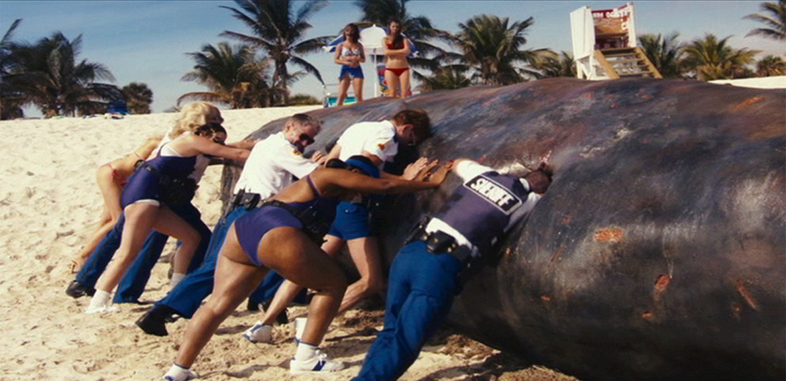 Cả đội phải chật vật nghĩ cách xử lý xác một con cá voi.