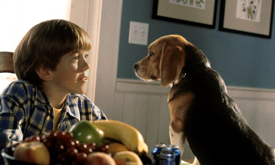 Một chú chó nhỏ vô danh được Hiệp hội Chó phái đến bảo vệ gia đình giáo sư.