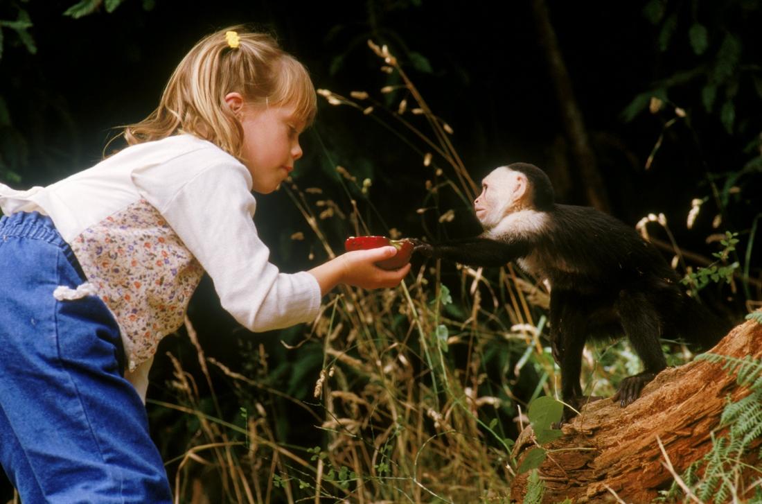 Virus Motaba đã bám theo những con khỉ tới xứ cờ hoa và nhanh chóng biến nơi đây hành một ổ dịch.