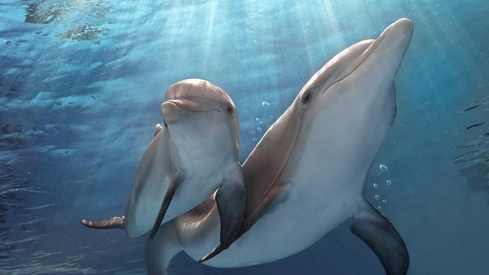 Đồng thời làm quen với bạn đồng hành nhỏ tuổi mới - chú cá heo Hope.