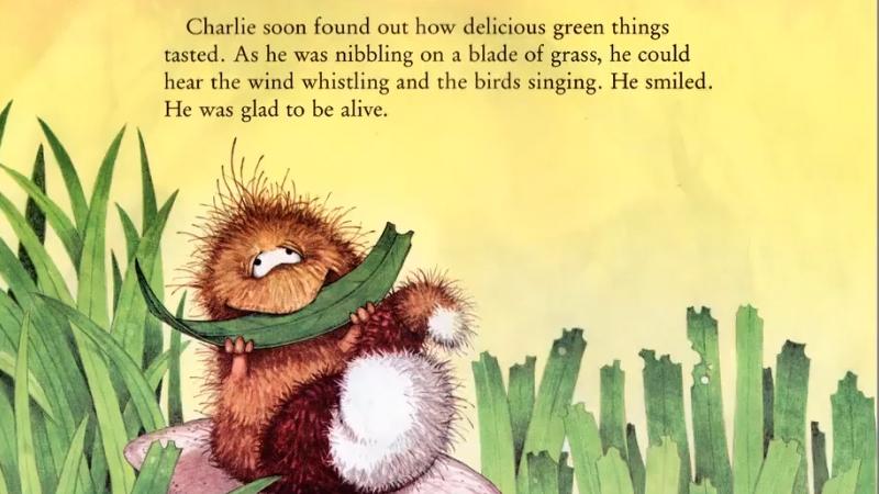 Charlie lần đầu ăn những chiếc lá có mùi vị hấp dẫn.