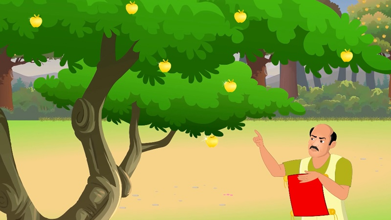 Người gác cây táo vàng đang đếm quả trên cây.
