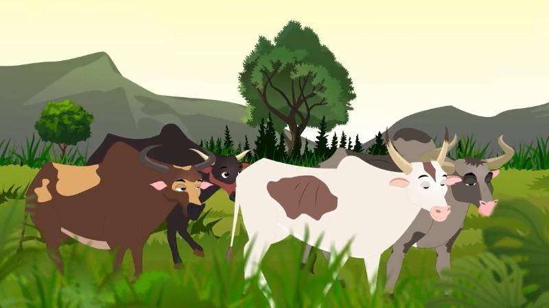 Đàn bò tìm chỗ bãi cỏ non để ăn.