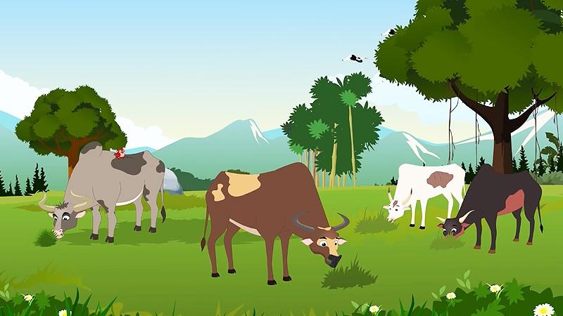 Cả đàn bò đoàn kết và cùng nhau gặm cỏ.