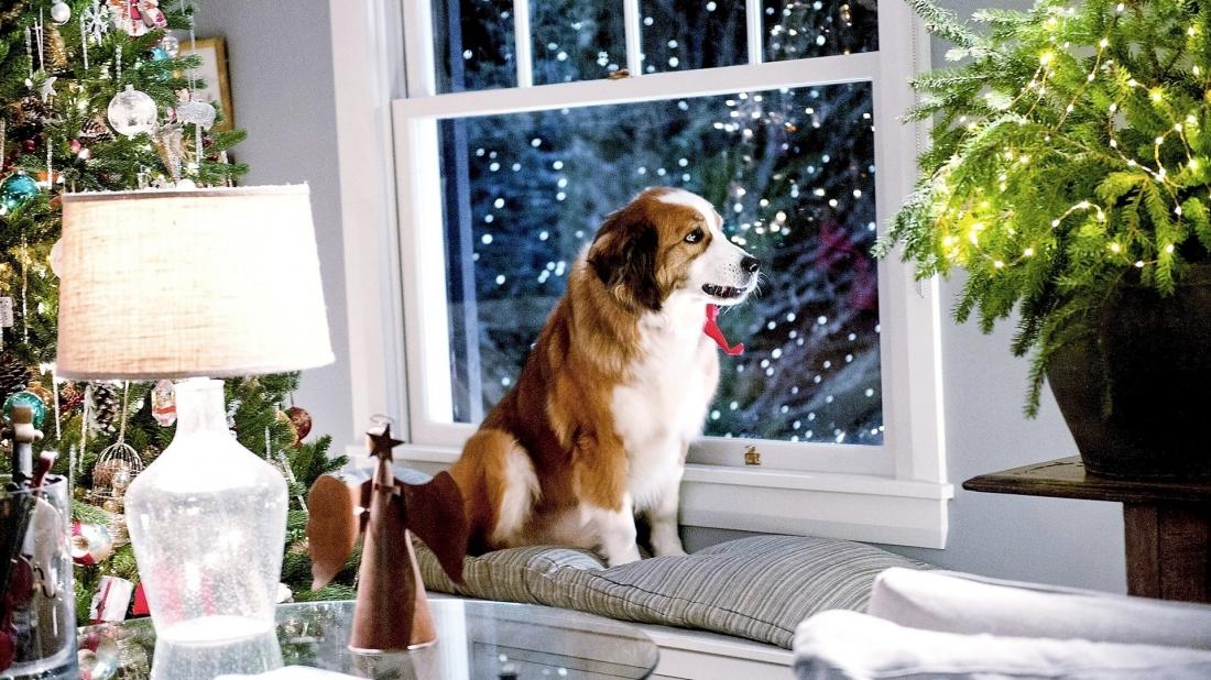 Phim xoay quanh một gia đình bốn thế hệ đang có nhiều rạn nứt ngay trước khi đoàn viên tại nhà ông bà Sam (John Goodman) và Charlotte (Diane Keaton) nhân dịp Giáng sinh.