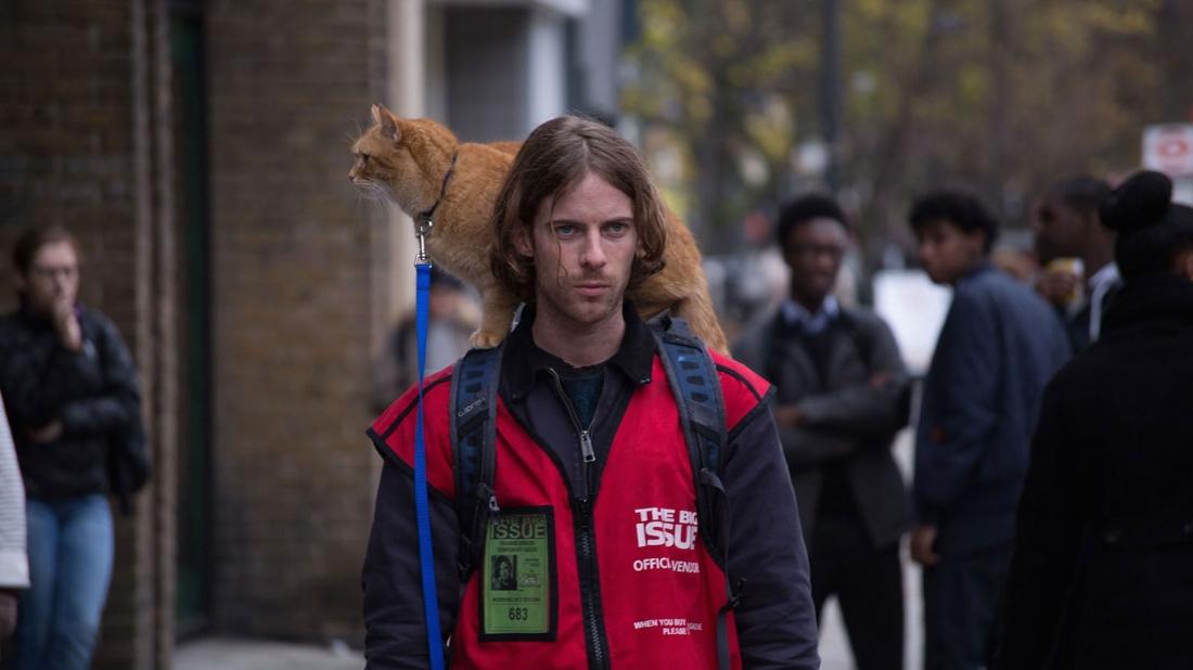 Bob là chú mèo đực lông vàng đẹp đẽ, bị James Bowen bắt gặp đang rình mò ở gian trước của mái ấm mà anh tạm trú.