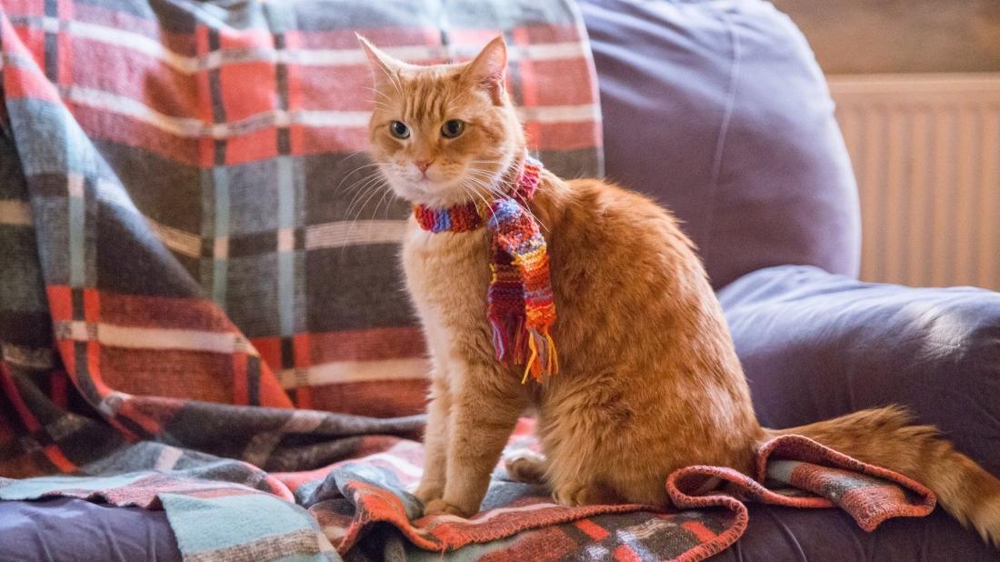 James nát như tương, nhưng lại không thể quay lưng với Bob, sau khi anh chữa lành cho chú mèo, họ trở thành một cặp đôi không thể tách rời.