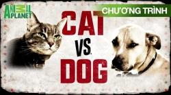 Cuộc Chiến Chó Mèo (Tập 2)