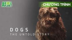 Chuyện Chưa Kể Về Loài Chó (Tập 4)
