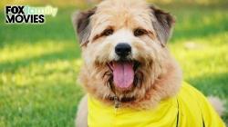 Chú Chó Đá Bóng: Cúp Châu Âu