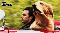 Cuộc Đời Phi Thường Của Chú Chó Enzo