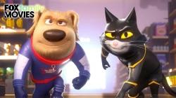 Những Chú Chó Mèo Siêu Anh Hùng