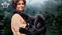 Gorillas Trong Sương Mù
