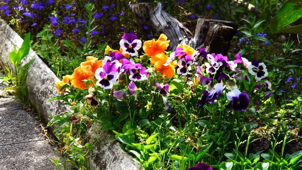 [4K] Mãn Nhãn Cảnh Sắc Tươi Mới Của Khu Vườn Mùa Xuân